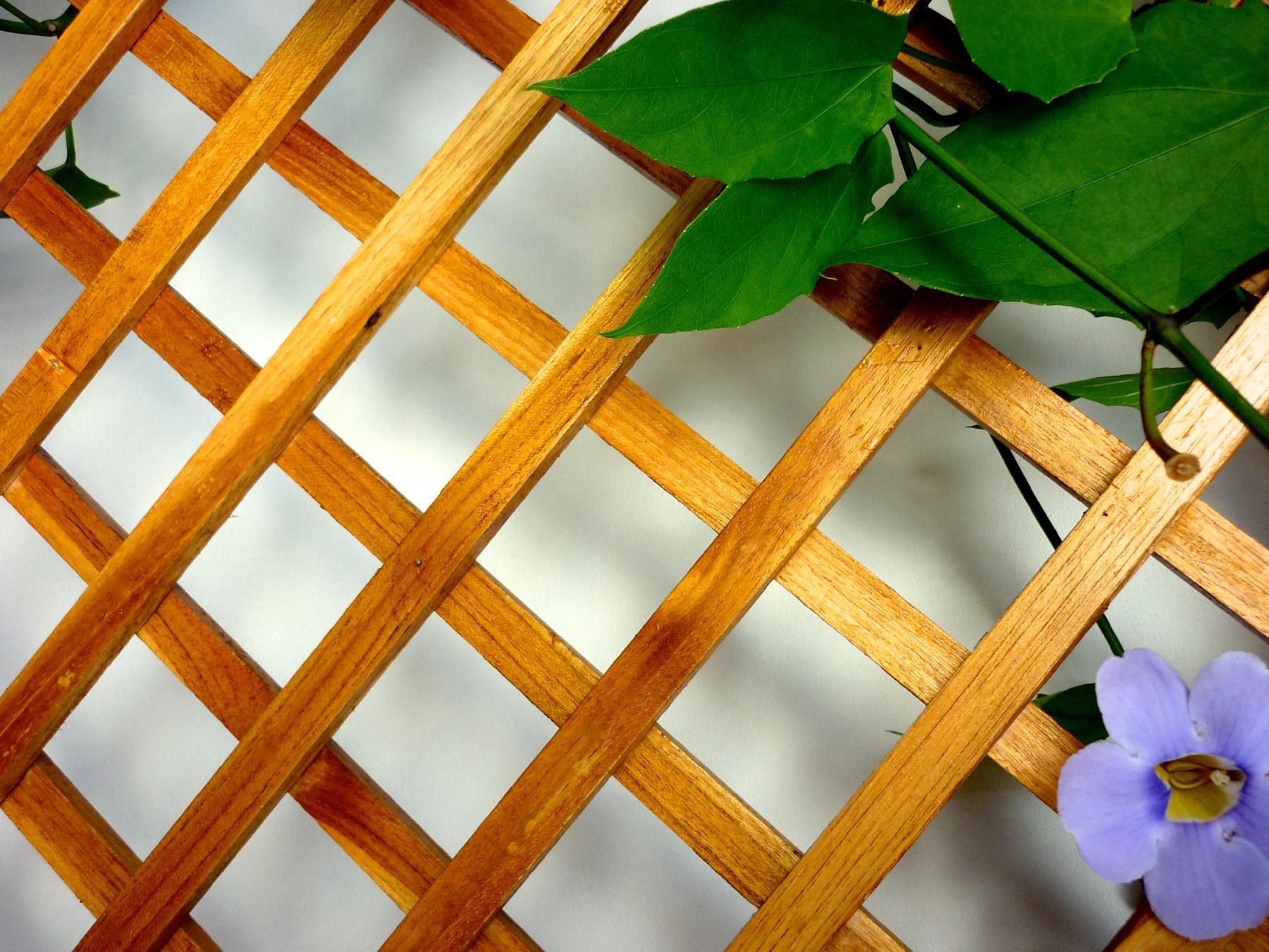 teak garden in panama,teak framework,teak lattice
